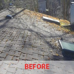Roof Moss Removal Seattle Wa
